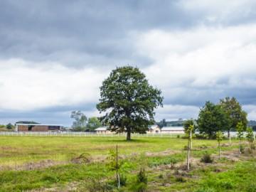 Ataman Çiftliği